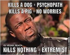 think about it and go vegan - Humor Culinario Funny Vegan Memes, Funny Humor, Vegetarian Memes, Funny Food, Reasons To Go Vegan, Vegan Facts, Why Vegan, Vegan Animals, Seriously Funny