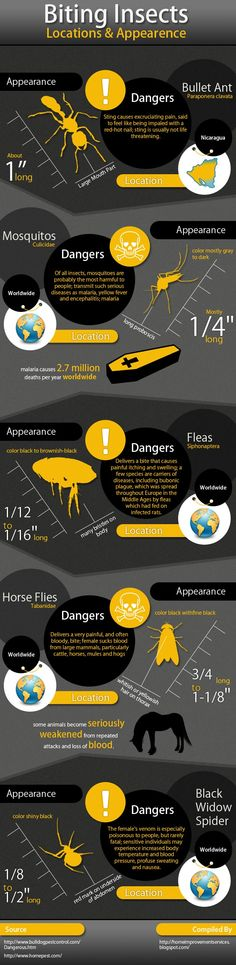 This Infographic carries all the information about the dangers of biting insects.