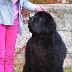 Am Doolittlehof - Hundezüchter in Niederfellabrunn Labrador Retriever, Dogs, Animals, Native Americans, Puppys, Pet Dogs, Labrador Retrievers, Animales, Animaux