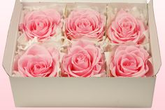 Preserved roses pale pink