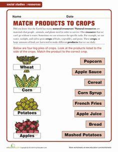 Kindergarten Plants, Animals & the Earth Worksheets: Crop Products