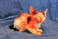 Who Spray-Painted This 6-Week-Old Kitten?Who Spray-Painted This 6-Week-Old Kitten? Savannah police want answers after a kitten turned up with orange paint covering the body and face.