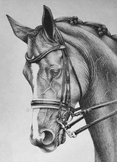 Horse portrait by LWB-Art - Animal Realistic Animal Drawings, Pencil Drawings Of Animals, Horse Drawings, Animal Sketches, Cool Art Drawings, Art Drawings Sketches, Portrait Au Crayon, Portrait Paintings, Arte Equina