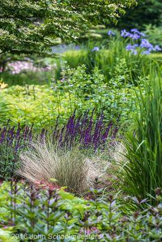 Gardendesign | Tuinontwerp | Salvia 'Caradonna' - Planting Design by John Schoolmeesters