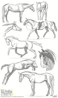 Draw Horses more horse studies by kalambo. Horse Drawings, Pencil Art Drawings, Animal Drawings, Drawing Sketches, Cool Drawings, Drawing Ideas, Sketching, Drawing Lessons, Drawing Techniques