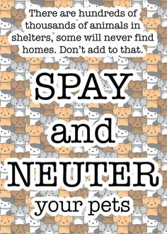 ...Don't Forget Our Outdoor Feral & Strays, They Deserve Our Compassion, Not Intolerance.  TNR Works, www.alleycat.org - Alley Cat Allies