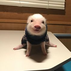 32 Adorable animal pictures that you do not want to miss - Baby Animals 2019 Baby Animals Pictures, Cute Animal Pictures, Animals And Pets, Animal Pics, Animal Quotes, Farm Animals, Cute Little Animals, Cute Funny Animals, Cute Dogs