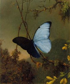 Martin Johnson Heade - Blue Morpho Butterfly - 1864/65  - Manoogian Collection - Two different shades of wing, nice solution for depicting its iridescent blue colour.