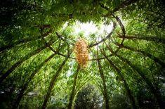 Living willow structure Garden Art