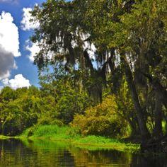 Myakka River. Sarasota.