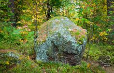Stone in the forest. Naantali, Finland. Photo © Soili Mustapää.