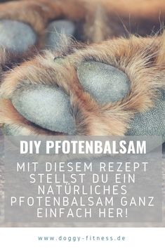 Make paw balm yourself - quick help for cracked dog paws - Paw balm against cracked paws can be easily and quickly made with natural ingredients. Types Of Humans, Food Dog, Winter Drawings, Dog Health Tips, Winter Landscape, Dog Paws, Beautiful Gardens, Dog Training, Animals And Pets