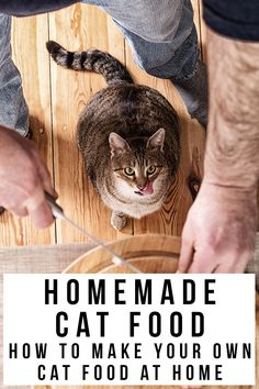 Healthy Cat Food, Best Cat Food, Canned Cat Food, Dry Cat Food, Pet Food, Human Food For Cats, Cat Site, Homemade Cat Food, Cat Food Brands