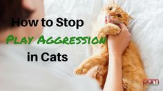 How to Stop Play Aggression in Cats | Cat Behavior Associates