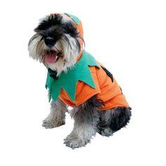 Disfraza de calabacita a tu mascota. Petsy.mx #disfraces