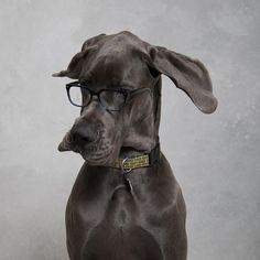 Warby Parker inspirations
