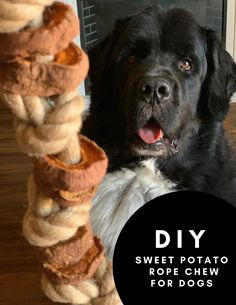 To make this simple DIY rope chew for dogs you'll need to slice your sweet potatoes into 1/2 inch slices, bake in the oven for 5 hours, string sweet potatoes through jute or hemp rope, knot at both ends and give to your dog under supervision. Dog Treat Recipes, Dog Food Recipes, Hypoallergenic Dog Treats, Food Dog, Dog Toilet, Sweet Potatoes For Dogs, Cute Dog Photos, Can Dogs Eat, Homemade Dog Treats