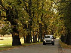 The stunning Millbrook Avenue of Trees in Autumn
