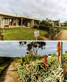 The Stables Cottages is situated on a small holdings just outside the West Coast gem, Langebaan, and offers the ultimate peaceful getaway. Here you'll have springbuck, chickens, ducks and geese on your doorstep! Stables, Farm Life, Ducks, West Coast, Farms, Cottages, South Africa, Gem, Whimsical