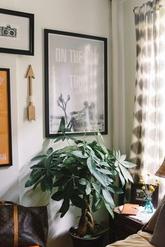 Fizz56   Lulu and Georgia Giveaway Winner's NYC Apartment Restyle! #theeverygirl