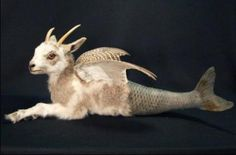 I feel kind of wrong for liking this taxidermy mermaid goat by Sarina Brewer, but I don't care because it is amazing and so so strange.