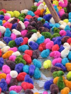 Crowd of chicks...How are we going to know who's who in this colourful mayhem?