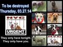 » Dogs To Be Destroyed Today or Tomorrow