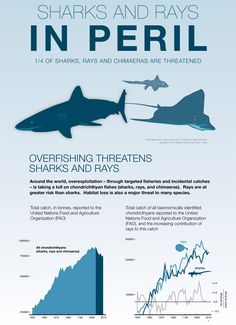 One Quarter of Sharks and Rays Threatened with Extinction ~ One quarter of all shark and ray species are threatened with extinction, according to a new study published in the open-access journal eLife. http://www.wakingtimes.com/2014/01/24/one-quarter-sharks-rays-threatened-extinction/