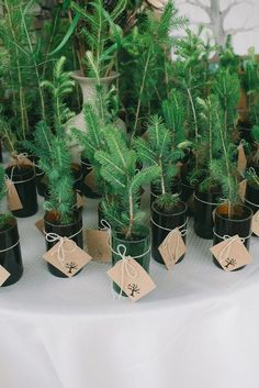 Baby tree wedding favors for a winter wedding | Bridget Rochelle Photography