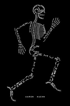 Aaron Kuehn's Skeleton and Muscle Typograms - Free PDFs for Wall Art.Do you know someone who would appreciate this free Skeleton Typogram - maybe a college student?Find the Skeleton Typogram here. You can print your own free PDF. You can also buy a print:Skeleton Typogram - PrintPlatinum ink on black deckle-edge paperScreen-printed at Seizure PalaceNumbered and signed15 × 22 inches / 38 × 56 cm$50 Find the Muscle Typogram here.