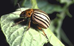 Out-smart common garden pests by strategically timing your planting.