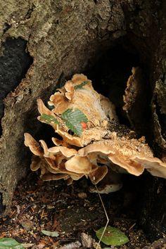 Paddestoelen in de herfst Firewood, Beef, Texture, Crafts, Meat, Surface Finish, Woodburning, Manualidades, Handmade Crafts