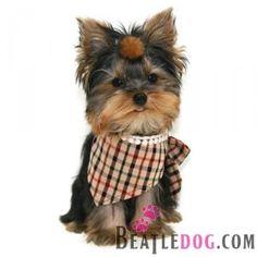 beatledog puppyzzang dog raffine check scarf
