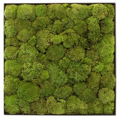 Green flower wall picture with real preserved ball moss Flower picture with 100% naturalised green ball moss for wall decoration. The moss is preserved and do have a lasting time of approx. 10 years. $724.46