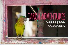Taroa Adventures, an eco-tourism company in Cartagena, Colombia: http://bkpk.me/discovering-the-caribbean-coast-of-colombia-with-taroa-adventures/