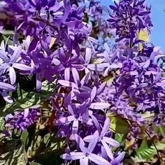 Orchid Plants, Orchids, May Garden, Peony Root, Indoor Flowering Plants, Chrysanthemum, Purple Flowers, Flower Power, Perennials