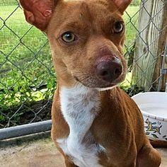 Dachshund Adoption, Pet Adoption, Okeechobee Florida, Foster To Adopt, Safari, Pitbulls, Dog Cat, Weird, Meet