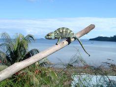 Nosy Be (Madagascar)