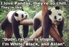 Them pandas, defying human laws.
