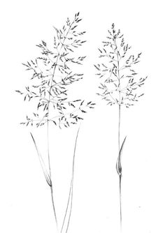 Set 4 spikelet sketch Botanical Art Print Hygge home decor clipart one line drawing grass artwork wild herb black white plant - 11 planting Drawing inspiration ideas Botanical Tattoo, Botanical Drawings, Botanical Art, Botanical Line Drawing, Plant Aesthetic, Aesthetic Drawing, Aesthetic Art, Clipart, Plant Sketches