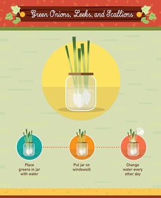 Reduce food waste by using food scraps to regrow vegetables. This detailed infographic includes 19 vegetables. Hydroponic Gardening, Hydroponics, Organic Gardening, Container Gardening, Urban Gardening, Urban Farming, Indoor Gardening, Regrow Vegetables, Growing Vegetables
