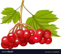 Free Vector Images, Vector Free, Single Image, Adobe Illustrator, Berries, Royalty, Clip Art, Pdf, Group