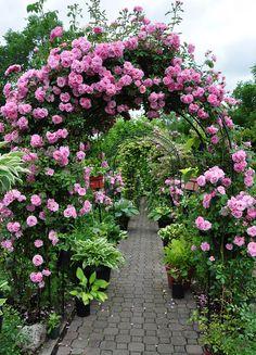 Rose Arbor by corpsef Magic Garden, Dream Garden, Beautiful Roses, Beautiful Gardens, Romantic Roses, Rose Arbor, Garden Arches, Climbing Roses, Garden Inspiration