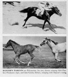 Polynesian (top) Geisha and foal (below) Grey Horses, Thoroughbred Horse, Frozen In Time, Racehorse, Life Magazine, Courses, Horse Racing, Geisha, Photo S