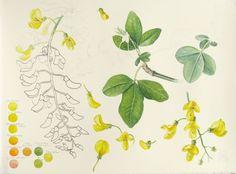 Botanical art sketches
