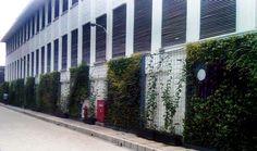 Vertical Garden Bank Indonesia Jakarta Kota terletak disekitar museum Bank Indonesia dipadukan dengan tanaman merambat