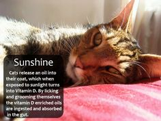 It's important for cats to have access to sunlight, and nothing beats rolling around in the garden!  If your furry feline doesn't have outside access, make sure to have some kind of sunny spot for them. Try putting a Cradle below or near a window that gets a lot of sunlight and enjoy the view!  For all the naked cats out there, careful not to get too much sun! Without the fur to protect their skin, they can burn quite easy.