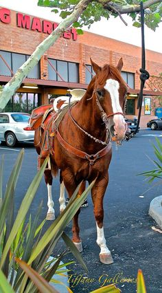 Altadena -- where you can still ride your horse to  the grocery store!!