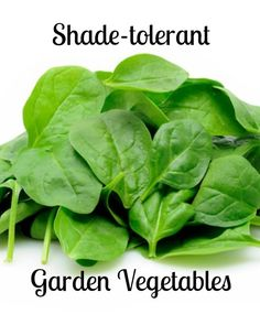 When planning a garden, it's important to know how much sunlight your plants will be getting and how much they need. The best vegetables to grow with less sun are leafy greens like kale, and root vegetables, such as beets.