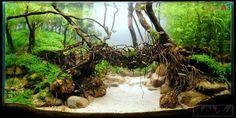 Evolução: The Living Bridge de Hamza Syed (215º IAPLC 2014) - AquaA3 - Aquarismo Alagoano